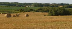 View of grain field with round bales and natural forest near Erickson, Manitoba.